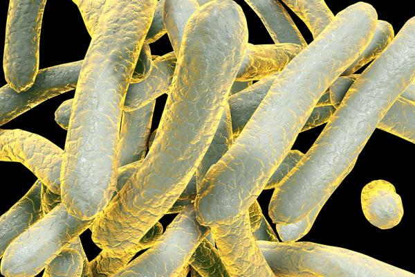 S'attaquer enfin aux racines de la tuberculose